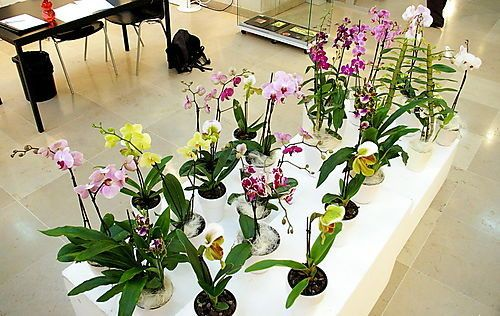 orchidee collection